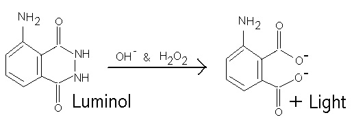 synthesis and chemiluminescence of luminol Several acetyl derivatives of luminol were synthesized and their  chemiluminescence were studied in water or in dmf-water the role of the amino  group in the.